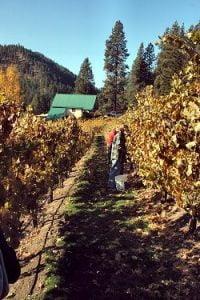 Eagle Creek Winery Vineyard