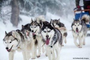 Dog Sledding in Washington