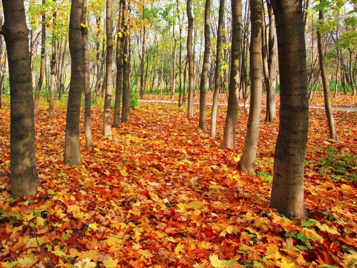 Leavenworth Autumn Leaf Festival