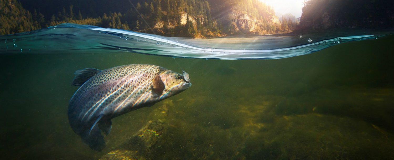 Wenatchee River Salmon Fishing