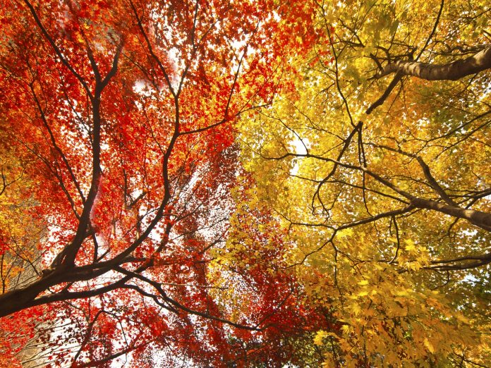 red and yellow fall foliage