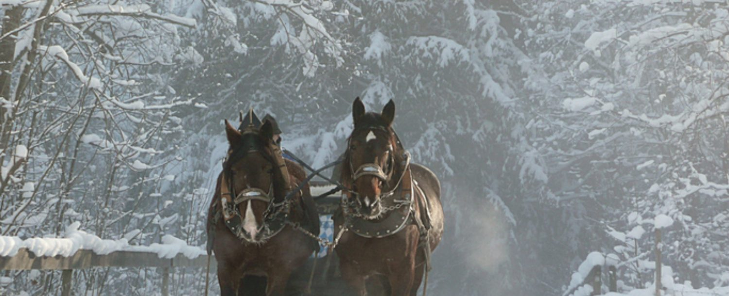 Two Horses Pulling Leavenworth, WA Sleigh Rides