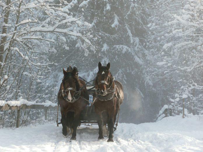 Two Horses Pulling Leavenworth, WA Sleigh Rides