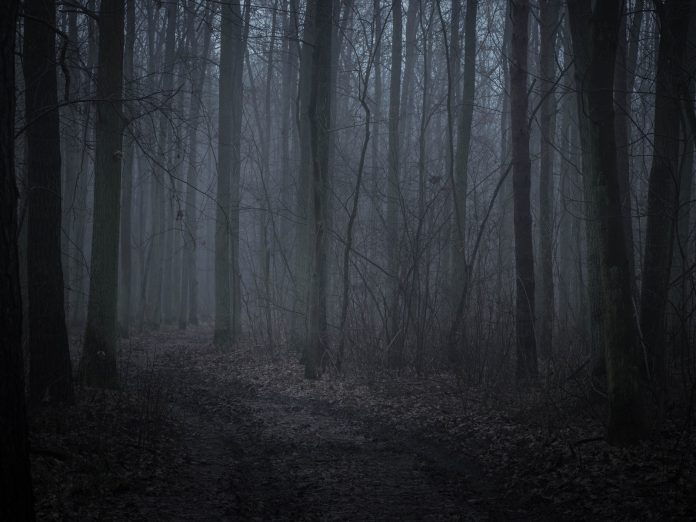 haunted dark forest at night