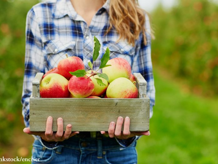 If you're looking for the best local produce, check out prey's fruit barn + smallwood's harvest